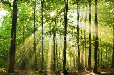 Bois et forets GFF groupement foncier forestier