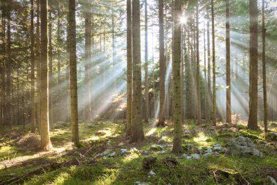 Investir dans les bois et forets GFF