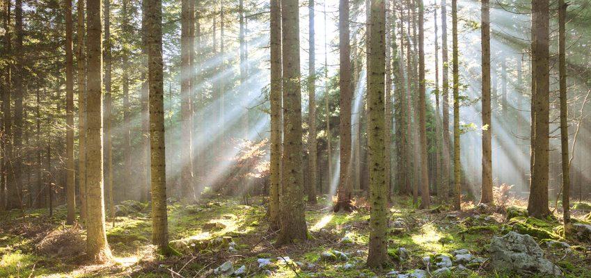 Les bois et for ts un placement qui confirme son statut de valeur refuge mingzi - Prix moyen d un stere de bois ...